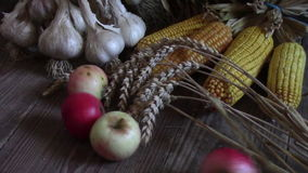 Harvested crops Thanksgiving stock video footage