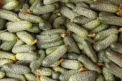 Harvested cucumbers Stock Photography