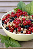 Harvested currant berries Royalty Free Stock Photos