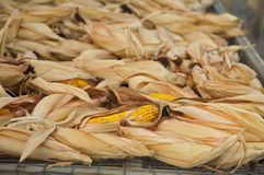 Harvested dried corn for feed Royalty Free Stock Photos