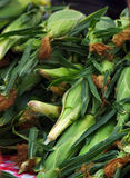 Harvested Ears of Corn Stock Images