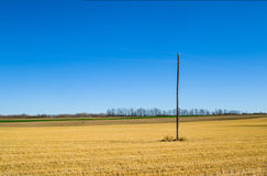 Harvested farm crop Royalty Free Stock Images