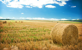 Harvested field Stock Photo