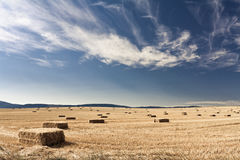 The harvested field. A golden field just harvested during the summer Royalty Free Stock Photos