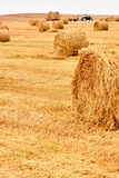 Harvested field Royalty Free Stock Photography