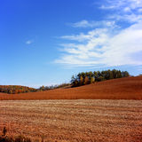 Harvested Field. Autumn landscape with a harvested field and forest on the background Royalty Free Stock Images