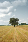 Harvested field Royalty Free Stock Image