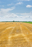 Harvested field with bales Royalty Free Stock Photo