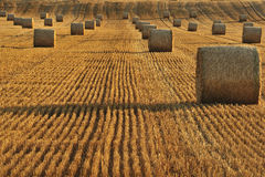 Harvested field. Bales of straw in a field after harvest. Taken at sunset. Space for text lower left Royalty Free Stock Image