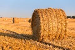 Harvested field Stock Photos