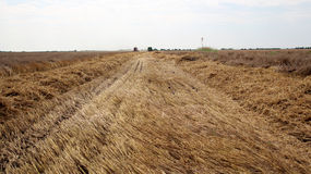 Harvested Field and Combines in Action Royalty Free Stock Image