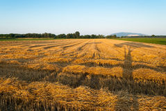 Harvested field Stock Photography