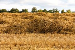 Harvested field Stock Images