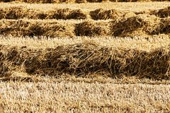 Harvested field Stock Image