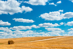 Harvested field after harvest Royalty Free Stock Photo