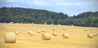 Harvested field with hay bales in cloudy day Royalty Free Stock Photo