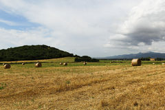 Harvested field with hay bales Stock Images