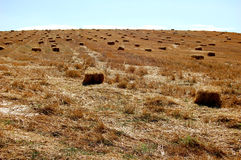 Harvested Field landsape Royalty Free Stock Images