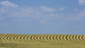 Harvested field landscape Stock Image