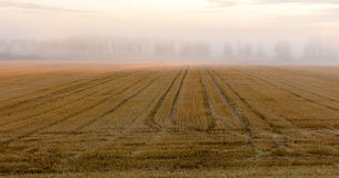 Harvested field and morning fog Stock Photography