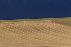 Harvested Field With Parallel Lines That Curve. Harvested Agricultural Farmland With Curved Contoured Parallel Lines Against A Dark Background Stock Image