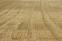 Harvested field Royalty Free Stock Photo
