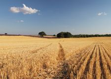 Harvested field in the Provence, France Royalty Free Stock Photography