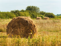 Harvested field with rolls of straw Royalty Free Stock Images