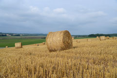 Harvested field with straw bales in autumn Stock Photo