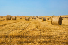 Harvested field with straw bales. And clear blue sky. Summer landscape Stock Photos