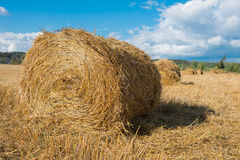 Harvested field with straw bales hay-roll Royalty Free Stock Photography