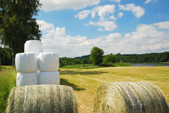 Harvested field with straw bales packaged. There are straw packages on the harvested field. Several bales in plastic film are stacked Stock Photos