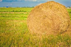 Harvested field with straw bales in summer Stock Image