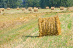 Harvested field with straw bales in summer Royalty Free Stock Photos
