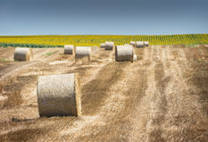 Harvested field with straw bales Stock Images