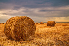 Harvested field with straw bales in sundown Royalty Free Stock Photos