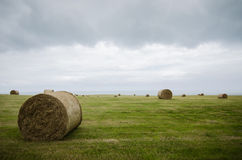 Harvested field with straw bales in winter Stock Image