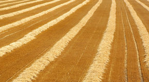 Harvested field in summer Stock Photography