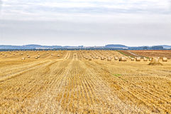 Harvested field in summer Stock Photos