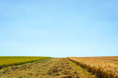 Harvested field during summer Stock Photo