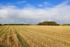 Harvested field and tyre tracks Royalty Free Stock Photos