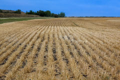 Harvested Fields. Farmers field fully harvested for the season Royalty Free Stock Image