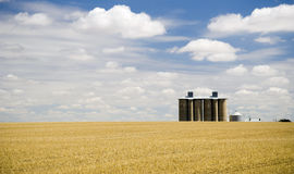 Harvested Fields with Silo. Harvested wheat field with grain silo's and cloudy blue sky with copy space Royalty Free Stock Image