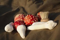 Harvested fly agaric mushrooms and a brush Royalty Free Stock Images