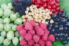 Harvested fresh raspberry, blackberry, mulberry, gooseberry. Lying on green leaf Stock Photo