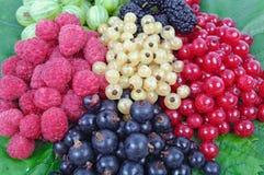 Harvested fresh raspberry, blackberry, mulberry, gooseberry. Lying on green leaf Stock Photography