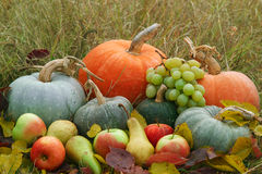 Harvested fresh vegetables and fruits. In autumn grass and leaves. Daylight. Decoration for Thaksgiving day Royalty Free Stock Image