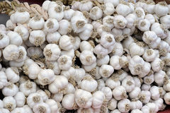 Harvested garlic Stock Photo