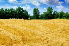 Harvested grain field Stock Photo