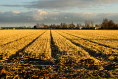 Harvested grain field Royalty Free Stock Photos